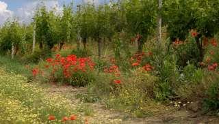 Biologische Languedoc