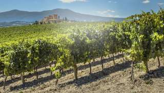 Sangiovese uit Florence