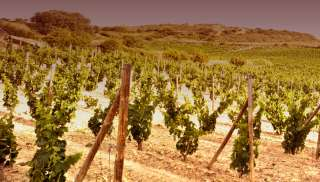 Verleidelijke Sauvignon Blanc uit de Bergerac