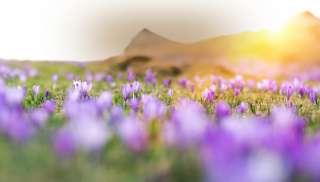 Verfrissende lentewijn