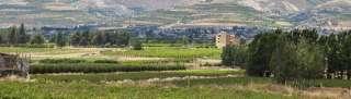 Bekaa Vallei
