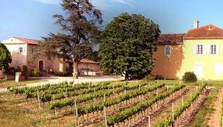 Robuuste Provence