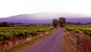 Verleidelijke Rhône wijn