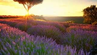 Stoere rosé uit de Provence