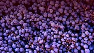 Fruitige Bardolino uit Veneto